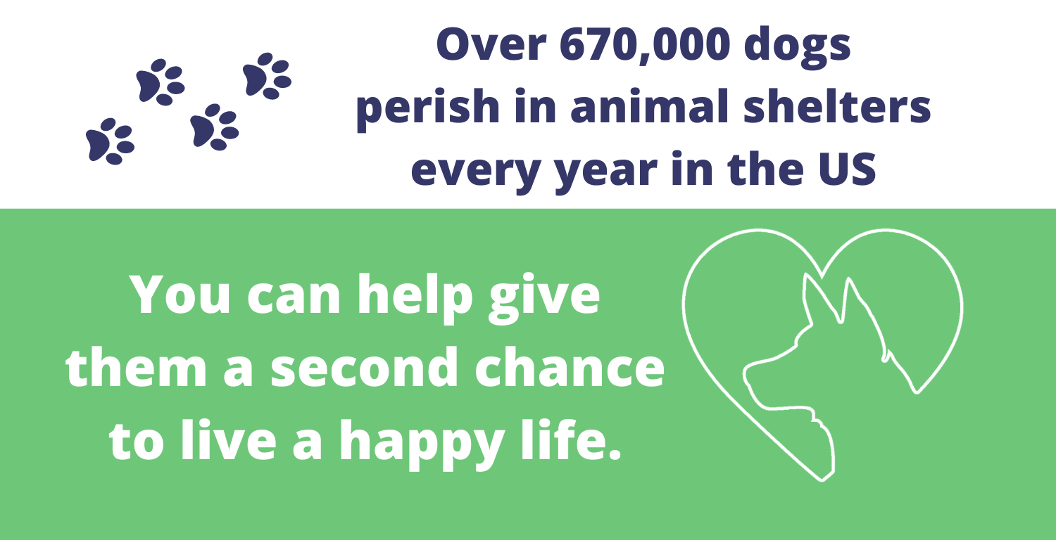 Over 670,000 dogs perish in animal shelters every year in the us. You can help give them a second chance at a happy life.